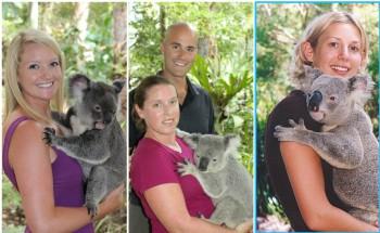 Koalas in Lone Pine